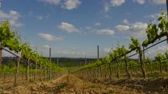 Close up vineyard Stock Footage