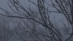 Snow Blizzard Through Trees - Version 1 -  No Color Correct Stock Footage