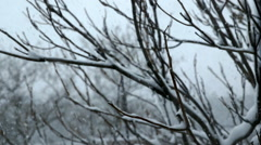 Snow Blizzard Through Trees - Version 2 - Color Corrected Stock Footage