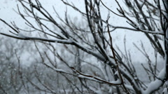 Snow Blizzard Through Trees - Version  3 - Color Corrected Stock Footage