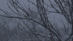 Snow Blizzard Through Trees - Version 4 - No Color Correct Stock Footage