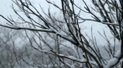 Snow Blizzard Through Trees - Version 4 - Color Corrected Stock Footage