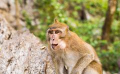 Close-up of monkey face in a nature background Stock Photos