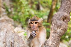 Close-up of monkey face in a nature background - stock photo