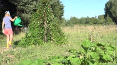 Hot happy country woman in shorts watering beans legume plants with green Stock Footage