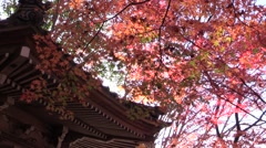 Red maple leaves and Japanese temple rooftop, Aichi Prefecture, Japan Stock Footage