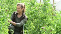 Woman checking crop yield in field row Stock Footage