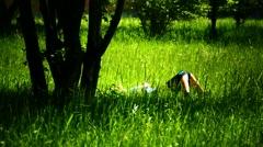 Relax Woman sunbathing on grassland meadow sunbath Stock Footage