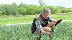 Farmer in field inspecting crop quality Stock Footage