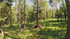 Beautiful sunny forest in spring Stock Footage