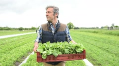 Farmer carrying tray of vegetables in field Stock Footage
