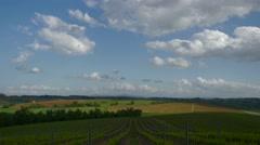 tuscan vineyard - stock footage