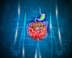 Gastrointestinal tract abstract background - stock illustration