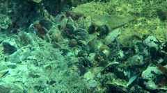 Settlement of mussels overgrown fungal hyphae. Stock Footage