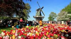 LISSE, THE NETHERLANDS - MAY 05 2016: Park Keukenhof. Stock Footage