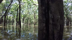 Cambodia - Flooded trees in mangrove rain forest. Kampong Phluk village. Stock Footage