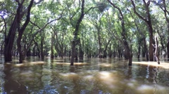 Video of flooded trees in mangrove rain forest. Kampong Phluk village. Stock Footage