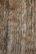 Brown earth tone sedimentary background Stock Photos