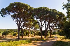 Road near Arcadi monastery, island of Crete Stock Photos