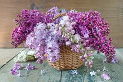 Lush multicolored bouquet of lilac Stock Photos