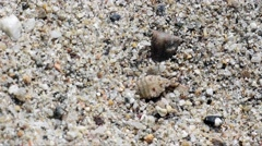 Antlion larva buries itself in the sand Stock Footage