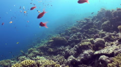 Underwater sea landscape of tropical coral reef. Stock Footage