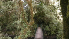 Crossing a bridge in a cloudforest valley Stock Footage