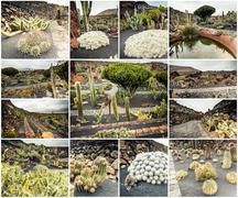 amazing sights of Lanzarote cactus farm - stock photo