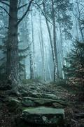 landscape of misty wood in mountains - stock photo