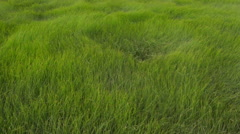 Grass waving in the wind. Stock Footage