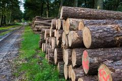 Timber Stacked logs in the forest Kuvituskuvat