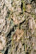 Close-up view of highly detailed tree bark - stock photo