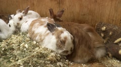 Rabbits in farm cage Stock Footage