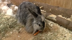 Rabbit in farm cage Stock Footage
