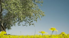 Windy tree and flowers Stock Footage