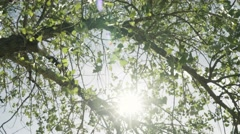 Sunlight through trees -  moving shot Stock Footage