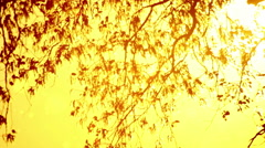 Pollen and tree leaves on the wind in sunset Stock Footage