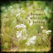 White Wildflower Summer Flower Collage - stock photo