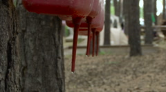 Wash Children's Hands. Red Plastic Washbasins Drips Drops in the Forest. Stock Footage