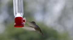 Hummingbird at Feeder Stock Footage