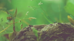 ants crawling along tree stub,  low perspective, blurred green background - stock footage