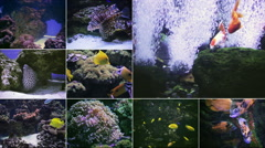 Many aquarium fish Arkistovideo
