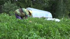 Organic rural farming. Gardener woman pick parasite animals from plant. 4K Stock Footage