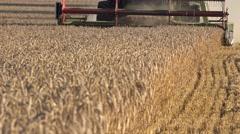 Seasoanl rye harvesting work in rural farm at end of summer. 4K Stock Footage