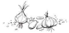 Garlic illustration drawing.Hand drawn of garlic in different shape and stead - stock illustration