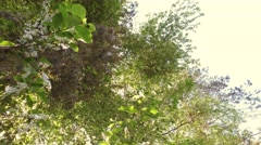 Sun shine between forest tree tops. Low-angled tracking panorama. - stock footage