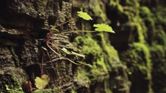 Dolomites rock covered by moss and grass - stock footage