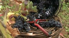 Grape harvest tools. Vintage, harvest. - stock footage
