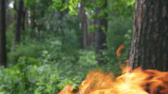 Flames and smoke in the forest. - stock footage