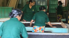 Women are engaged in oxidation and drying tea leaves in tea factory, Sri Lanka - stock footage